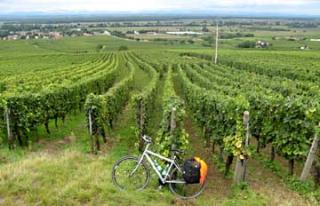 Cycling in the Vinyards of France