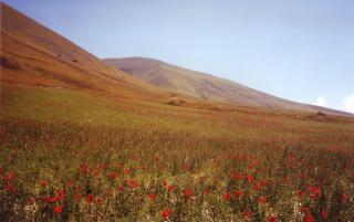 Field of flowers in the Monti Sibillini in Umbria, Italy