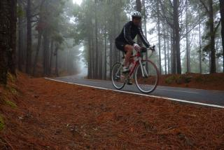 Through the mist of Corona Forestal, Tenerife, Canary Islands