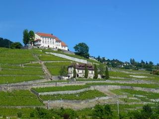 The hills of Lavaux, a UNESCO World Heritage Site